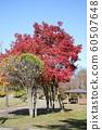 Autumn leaves of Chiaki Park 60507648
