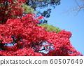 Autumn leaves of Chiaki Park 60507649