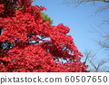 Autumn leaves of Chiaki Park 60507650
