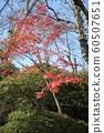 Autumn leaves of Chiaki Park 60507651
