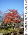 Autumn leaves of Chiaki Park 60507652