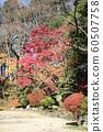 Autumn leaves of Chiaki Park 60507758
