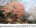 Autumn leaves of Chiaki Park 60507759