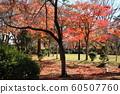 Autumn leaves of Chiaki Park 60507760