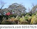 Chiaki Park in early winter 60507826