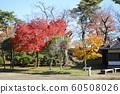 Autumn leaves of Chiaki Park 60508026