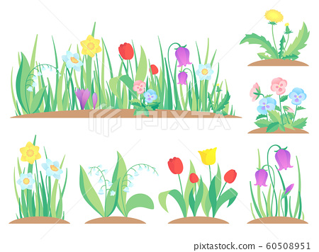 Spring garden flowers. Early flower, colorful gardens plants and flowering plant gardening flat vector illustration 60508951