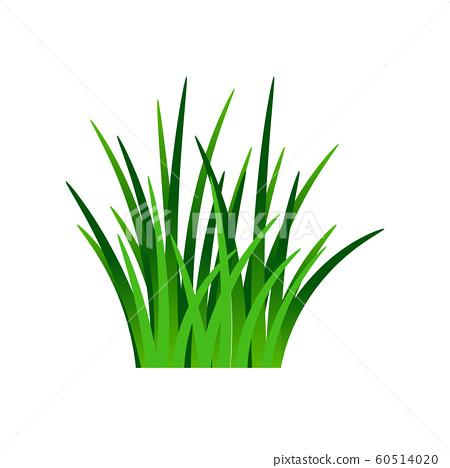 Dark green grass isolated on white 60514020