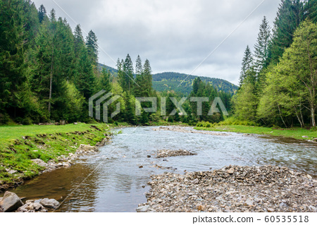 mountain river in the forest 60535518