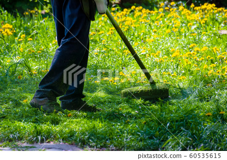 trimming dandelions and other weeds in the yard 60535615