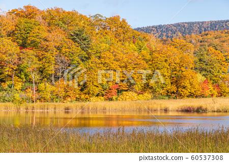 Autumn Towada Hachimantai National Park Hachimantai Onuma 60537308