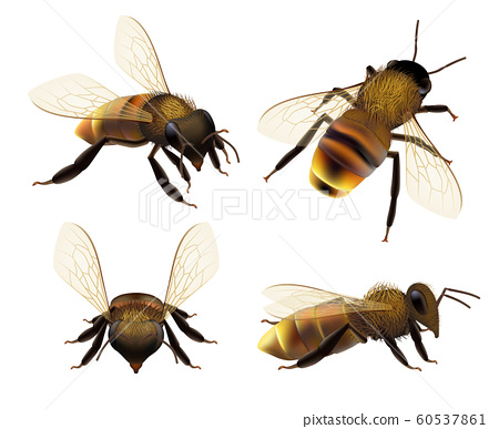 Bee realistic. Wildlife insect honeybee fly danger wasp pollen bugs eco natural product vector collection 60537861