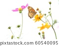 Cosmos and Butterflies 60540095