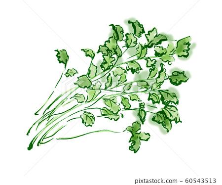박지성, 샨차이, 고수풀, 향초, 야채, 태국 음식, 태국, 야채, 향기, 냄새, 고수 60543513