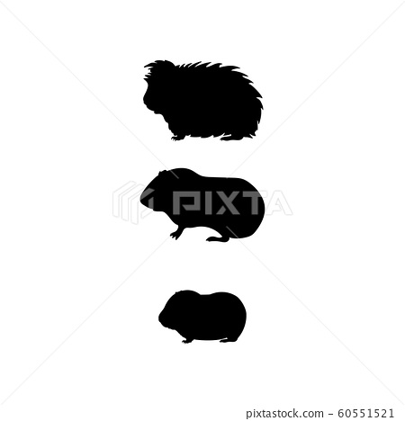 Guinea pig family. Silhouettes of pet animals 60551521