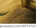 收割機倒下剛收割完的穀子 60574720