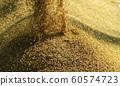 收割機倒下剛收割完的穀子 60574723