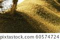 收割機倒下剛收割完的穀子 60574724