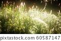 wild flowers in the field 60587147