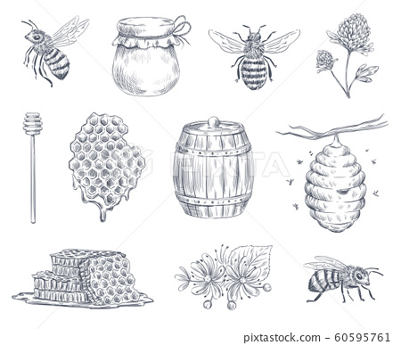Bee engraving. Honey bees, beekeeping farm and honeyed honeycomb vintage hand drawn vector illustration set 60595761