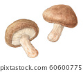 Shiitake mushroom hand-painted watercolor 60600775