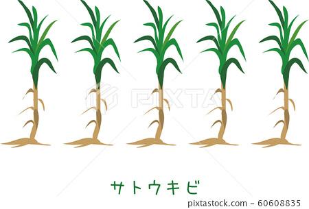 南國Am美甘蔗植物糖 60608835