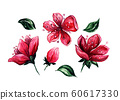 Japanese cherry or red sakura watercolor clipart. Pink floral drawings. Spring Blossoming plant elements 60617330