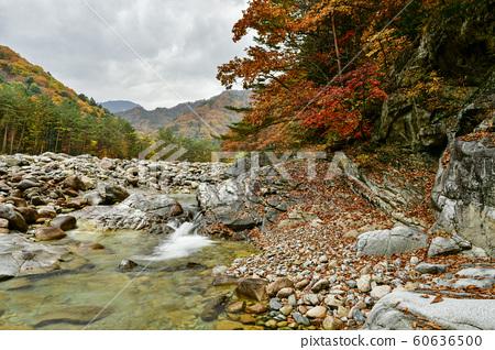 백담계곡,설악산,인제군,강원도,한국 60636500