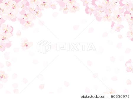 벚꽃 배경 일러스트 60650975