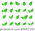 hand drawn veined green leaf icon eco set 60667183