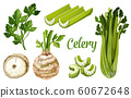 Organic farm bio celery leaf, stem and tuber root 60672648