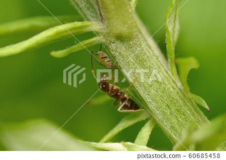 개미와 진딧물 60685458