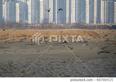 시흥갯골생태공원,시흥시,경기도 60700515