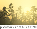 Vector illustration of coniferous forest with 60731190