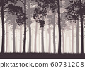Pine forest with tree trunks and branches 60731208