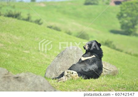亞洲黑熊 60742547