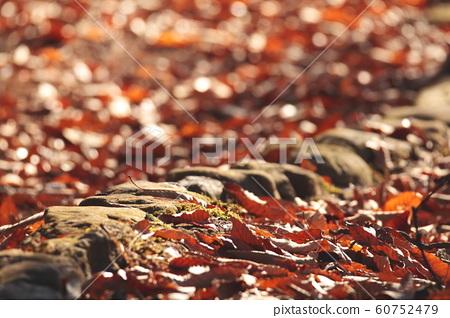 Fallen leaves 60752479