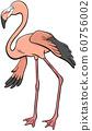 flamingo bird animal character cartoon 60756002