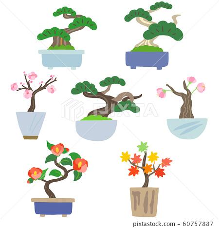 盆景室內盆栽植物 60757887