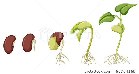 Diagram showing plant growing on white background 60764169