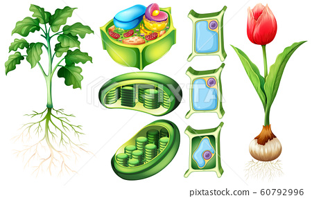 Diagram showing plant and plant cell 60792996