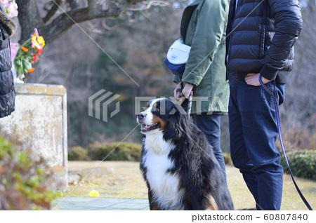 參觀伯恩山犬的前任犬的墳墓 60807840