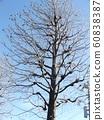 겨울입니다 열매 만 남기고 미국 후우 대목 60838387