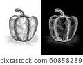 Bell pepper. Grunge sketch. Vector illustration on black and white. 60858289