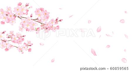春天的花朵:櫻花和落花瓣背景水彩插圖 60859565