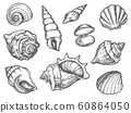 Set of isolated seashell sketches or conch, shell 60864050