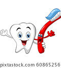 牙科 牙齿 矢量 60865256