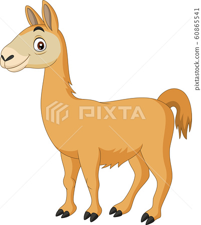 Cartoon Llama on white background	 60865541