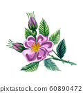 Watercolor illustration with dog rose. Eglantine flower with leaves and berries issolated on white background. 60890472