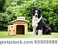 Sheepdog standing beside dog house with a foreclosure placard on top 60909988